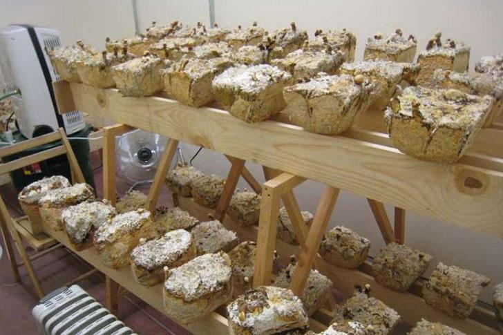 mushroom furniture 8 Rýchlo rastúce huby sko stavebné tehly ktoré sú silnejšie ako betón
