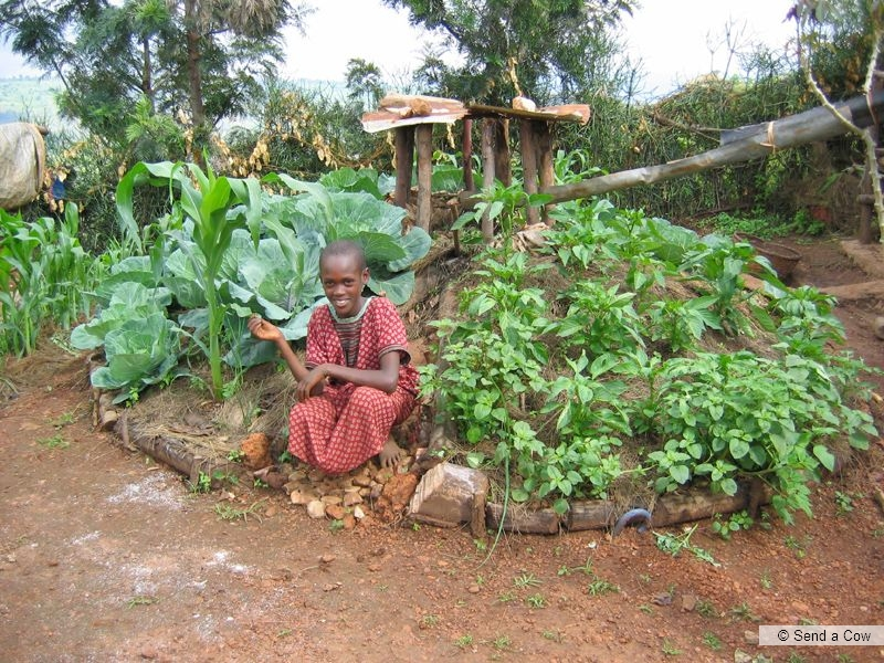 keyhole3 Keyhole Gardens   Africké vyvýšené záhony vo vašej záhrade