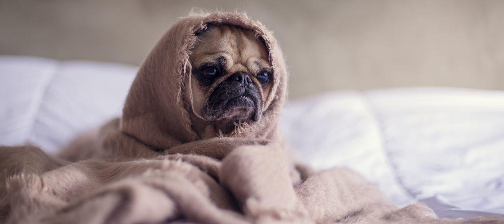 pes v deke